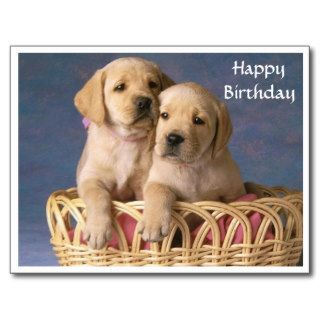 Happy Birthday Labrador Retriever Puppy  Post Card