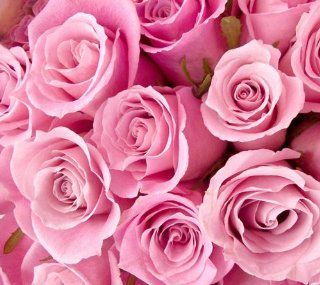 Light Pink Long Stem Rose 400 Stems  Fresh Cut Format Rose Flowers  Grocery & Gourmet Food
