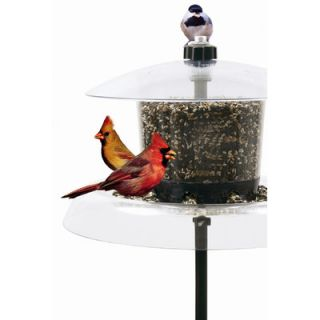 Droll Yankees Jagunda Squirrel Proof Bird Feeder with Auger
